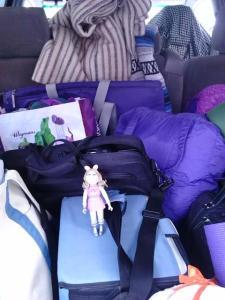 piggy erie purple