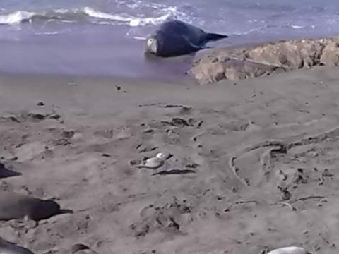 seal water