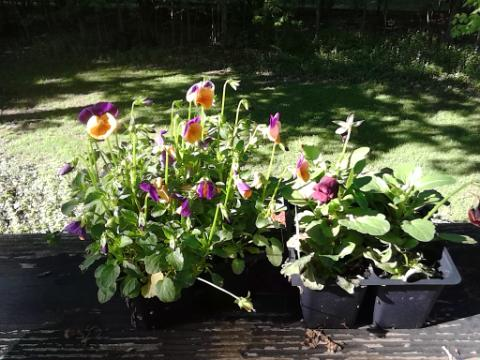 deck flowers 5-14