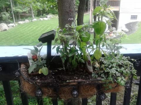 deck plants 2