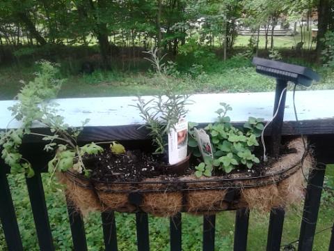 deck plants 3