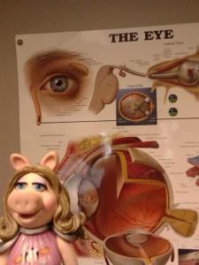 piggy eyes 1