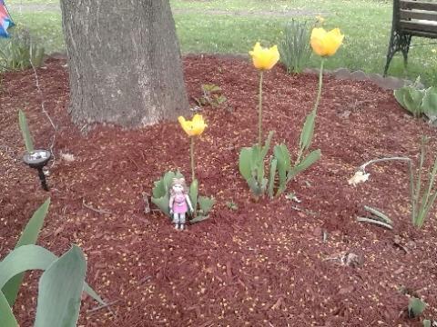 piggy tulips 2