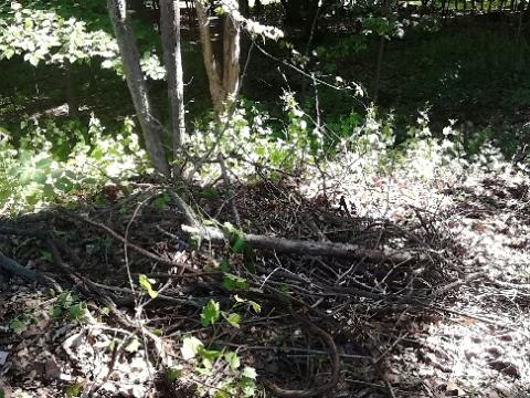 vines and sticks