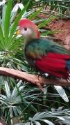zoo bird