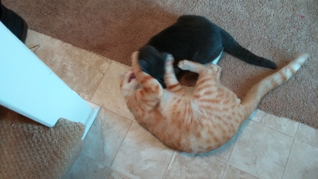cats-wrestling