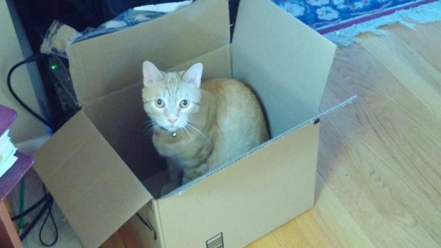 Caesar box