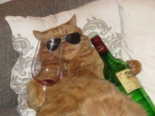 cat celebration